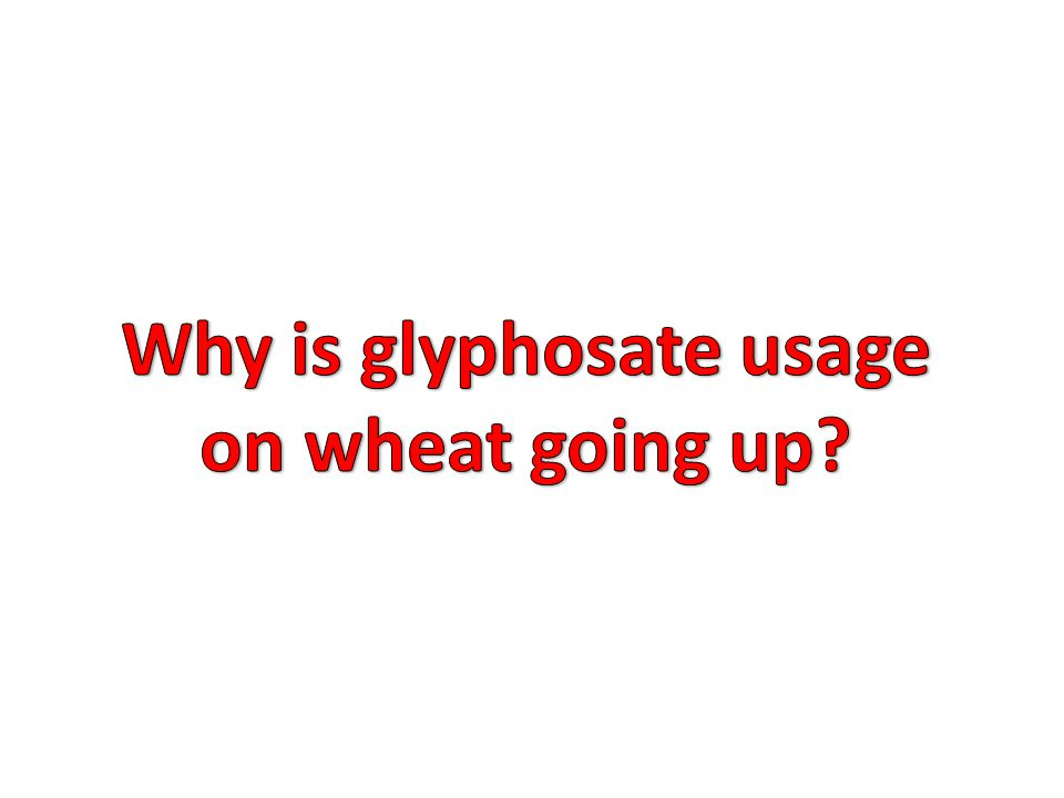Why is glyphosate usage on wheat going up