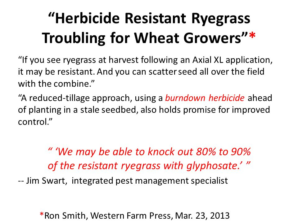 Herbicide Resistant Ryegrass Troubling for Wheat Growers *