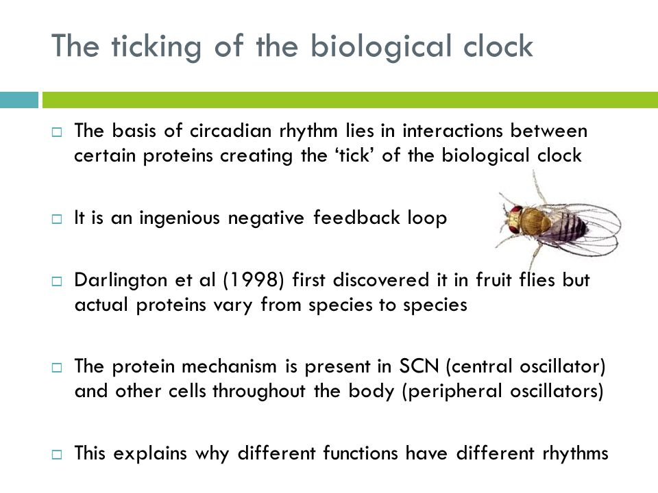 The ticking of the biological clock