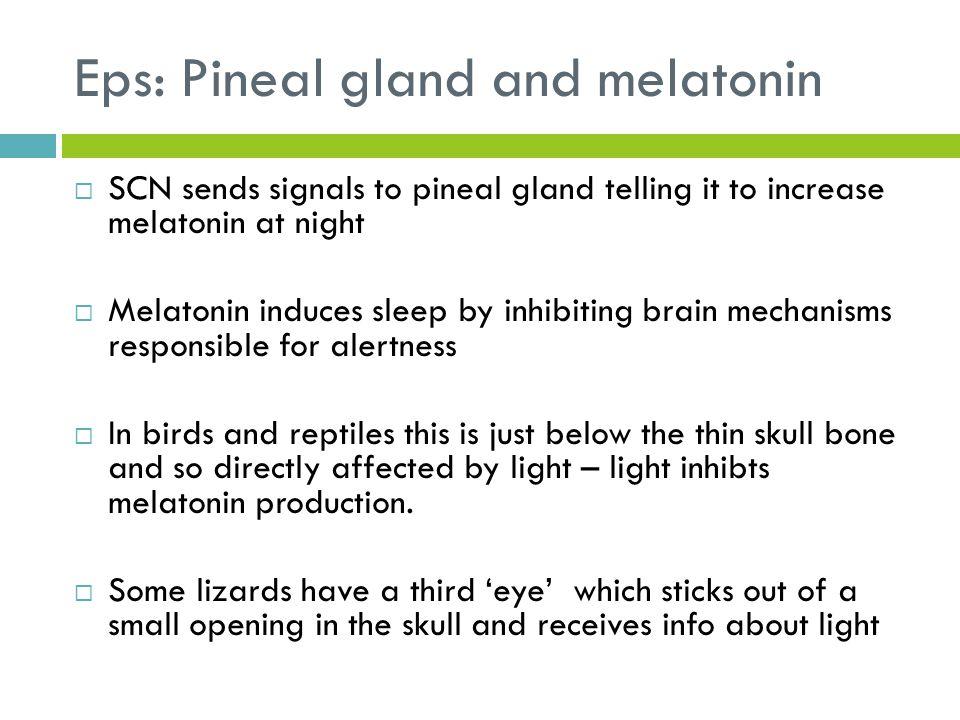 Eps: Pineal gland and melatonin