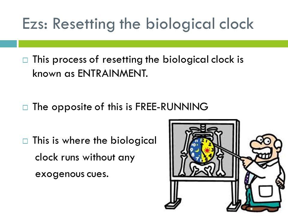 Ezs: Resetting the biological clock