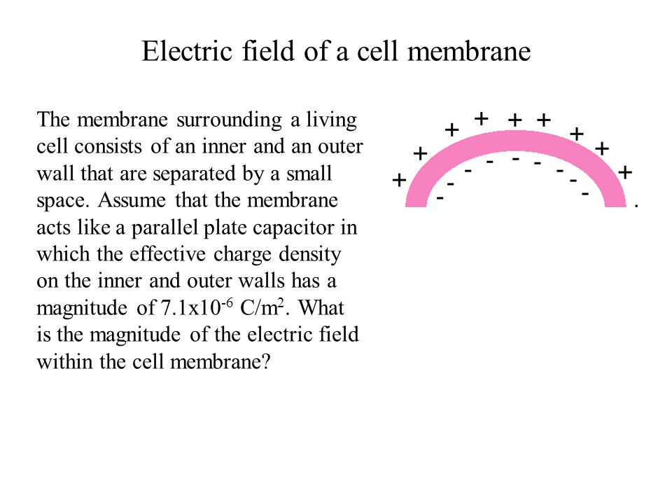 Electric field of a cell membrane