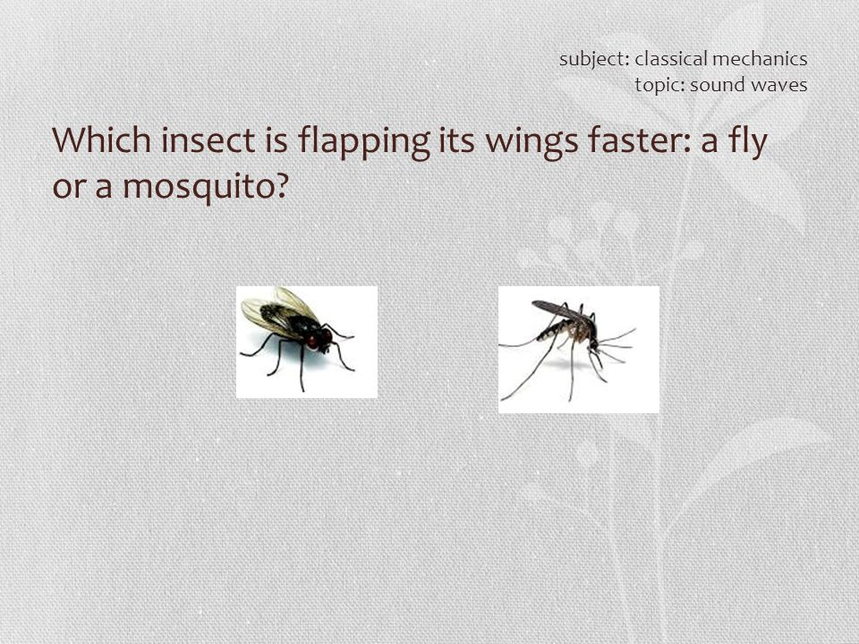 Which insect is flapping its wings faster: a fly or a mosquito