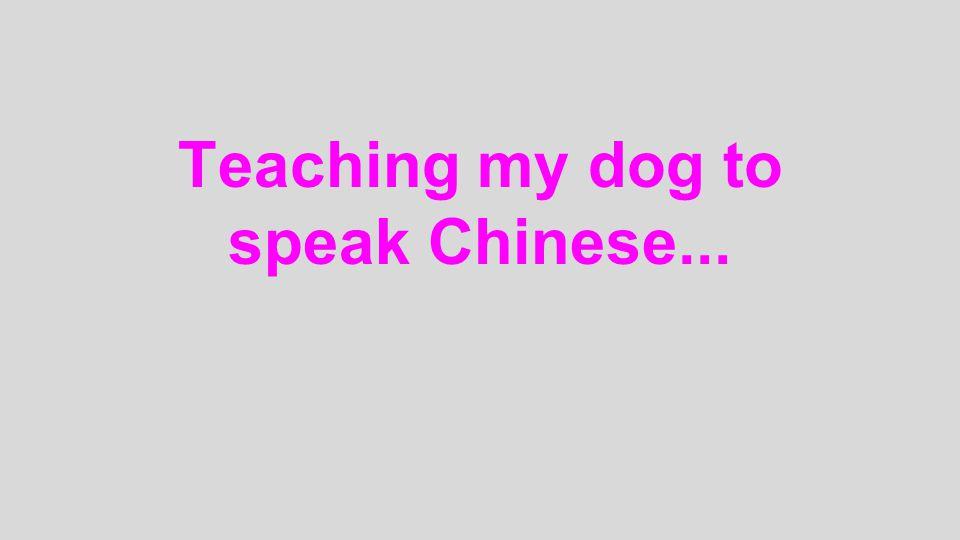 Teaching my dog to speak Chinese...