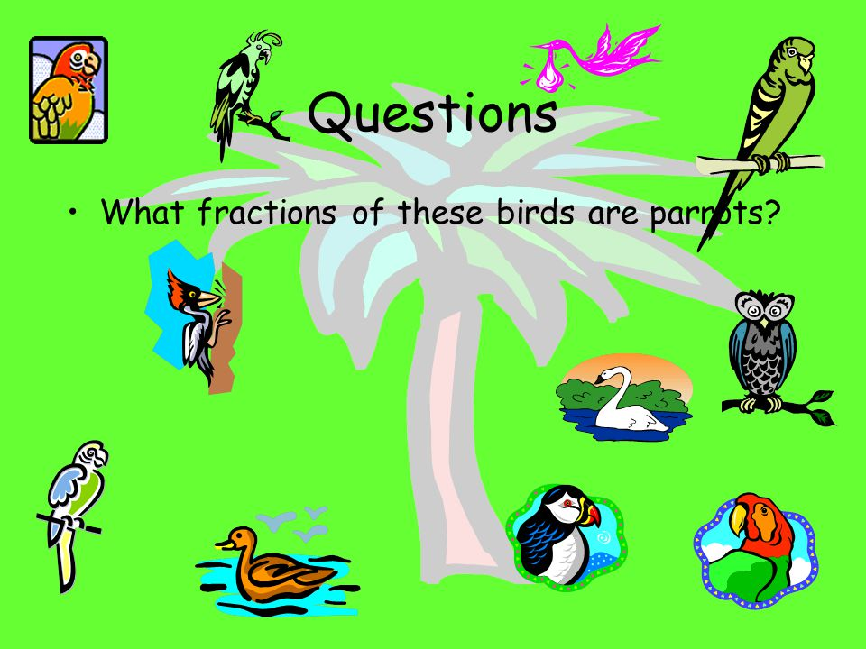 Questions What fractions of these birds are parrots
