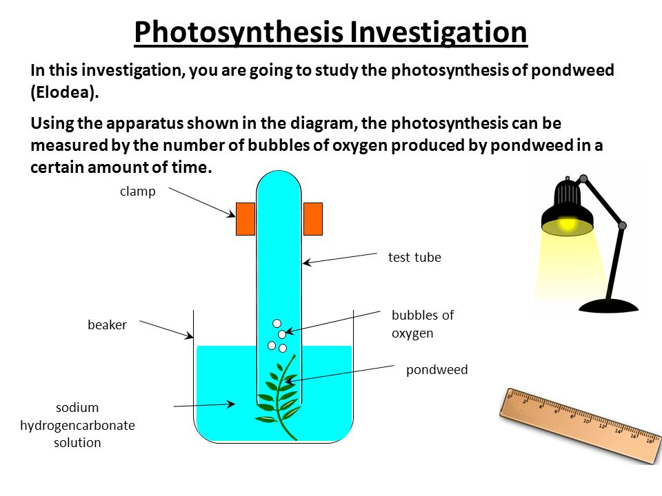 Photosynthesis Investigation