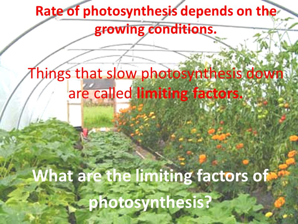 What are the limiting factors of photosynthesis