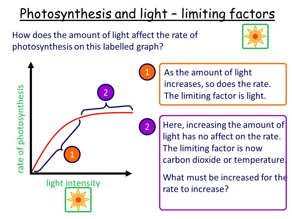 Photosynthesis and light – limiting factors
