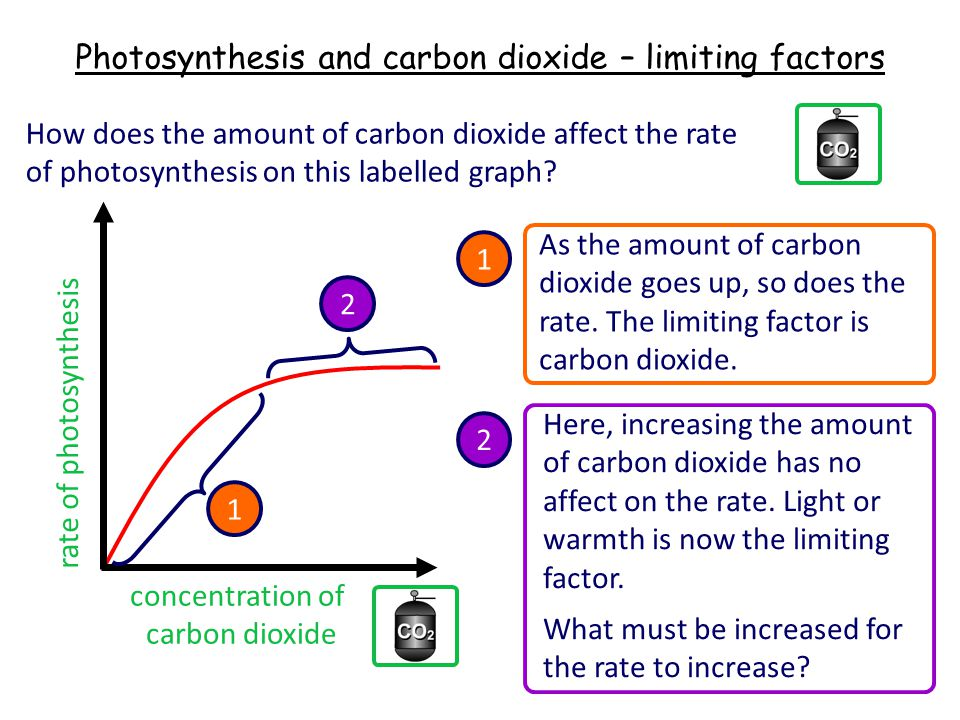 Photosynthesis and carbon dioxide – limiting factors