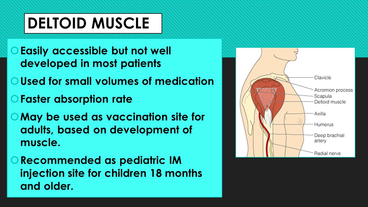 DELTOID MUSCLE Easily accessible but not well developed in most patients. Used for small volumes of medication.