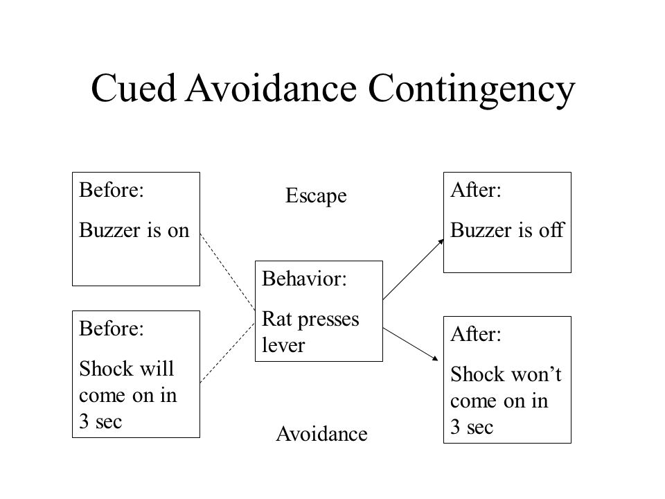 Cued Avoidance Contingency