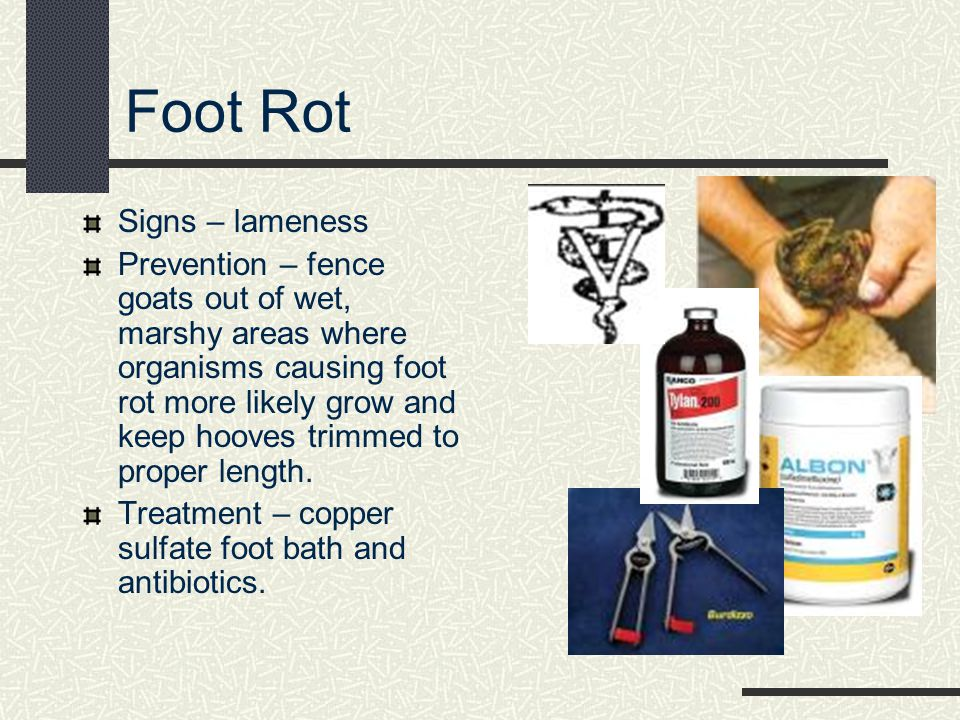 Foot Rot Signs – lameness