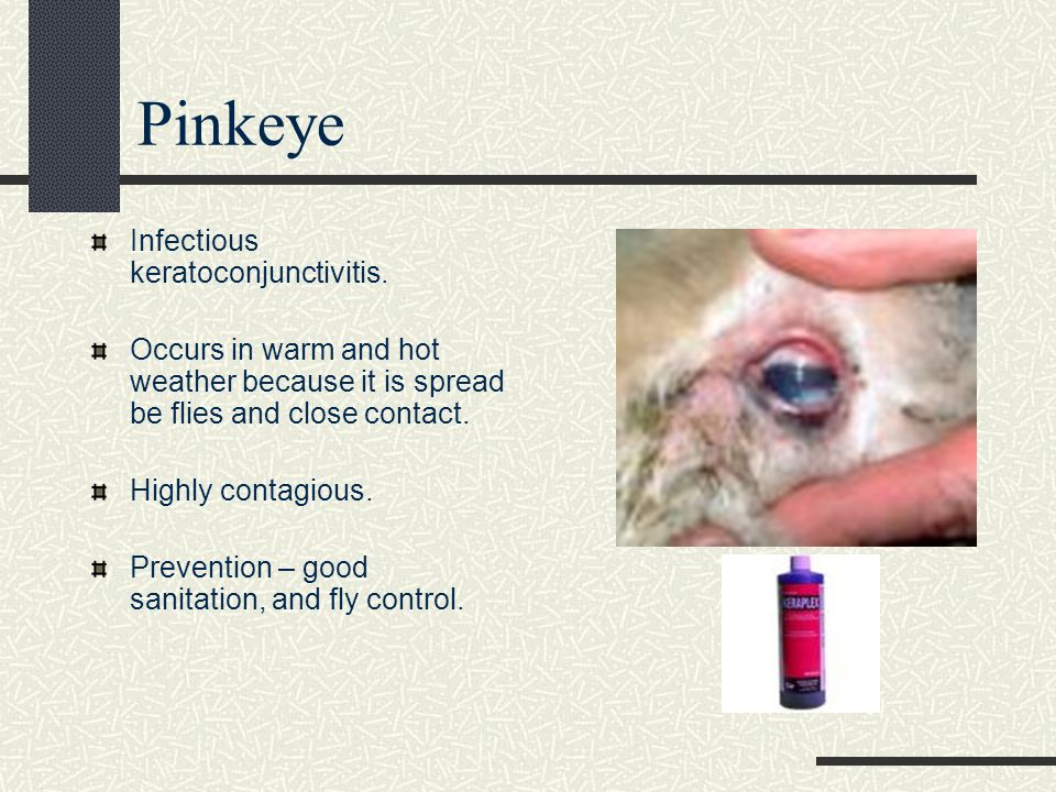 Pinkeye Infectious keratoconjunctivitis.