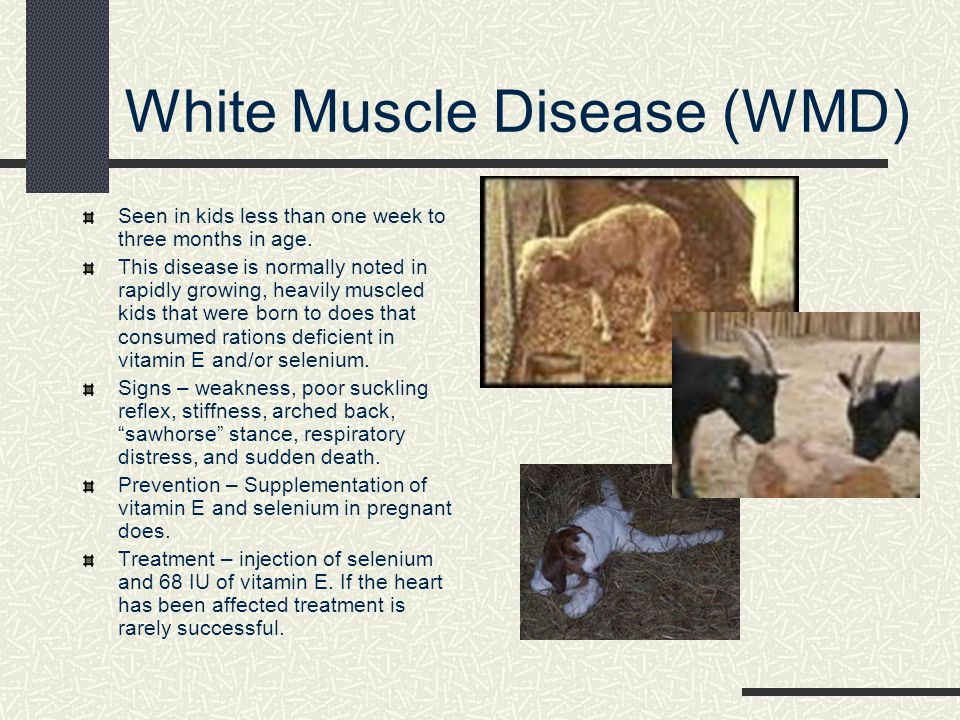 White Muscle Disease (WMD)