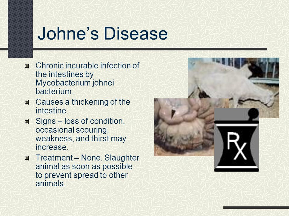 Johne's Disease Chronic incurable infection of the intestines by Mycobacterium johnei bacterium. Causes a thickening of the intestine.