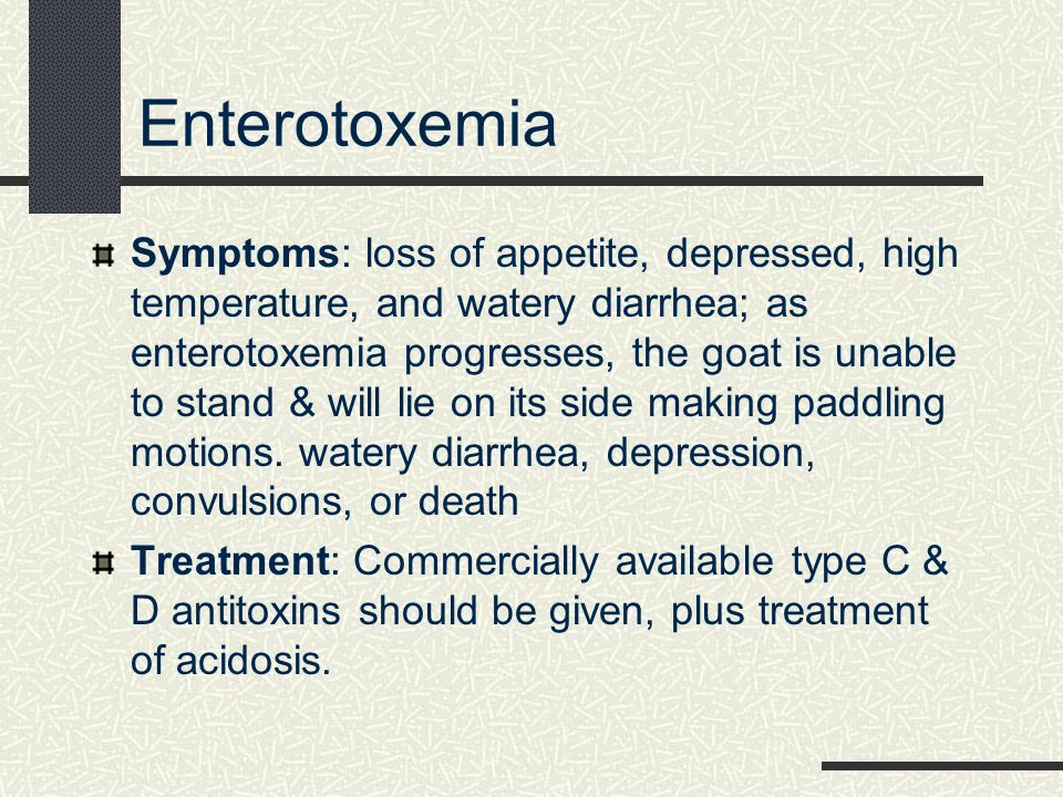 Enterotoxemia