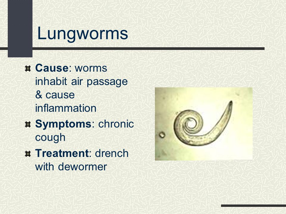 Lungworms Cause: worms inhabit air passage & cause inflammation