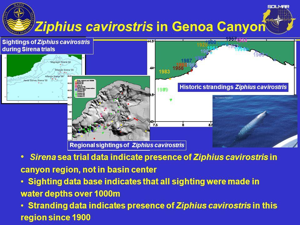 Ziphius cavirostris in Genoa Canyon
