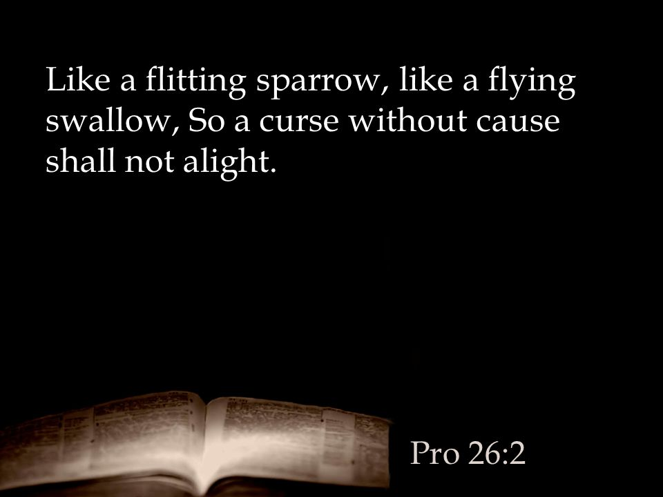 Like a flitting sparrow, like a flying swallow, So a curse without cause shall not alight.