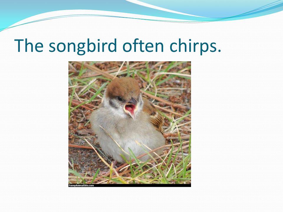 The songbird often chirps.