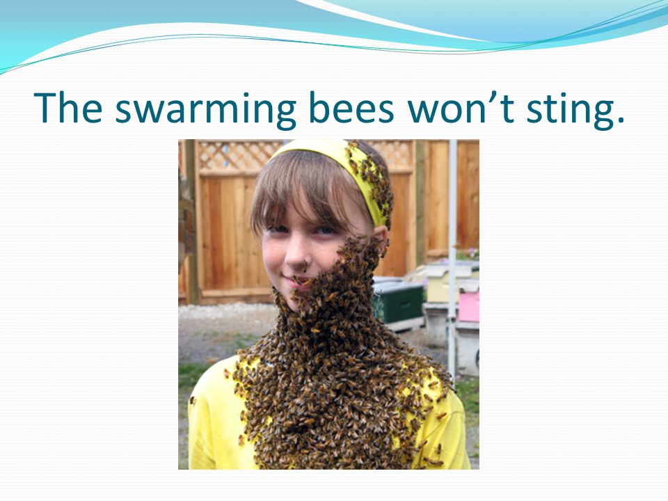 The swarming bees won't sting.