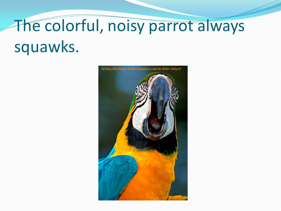 The colorful, noisy parrot always squawks.