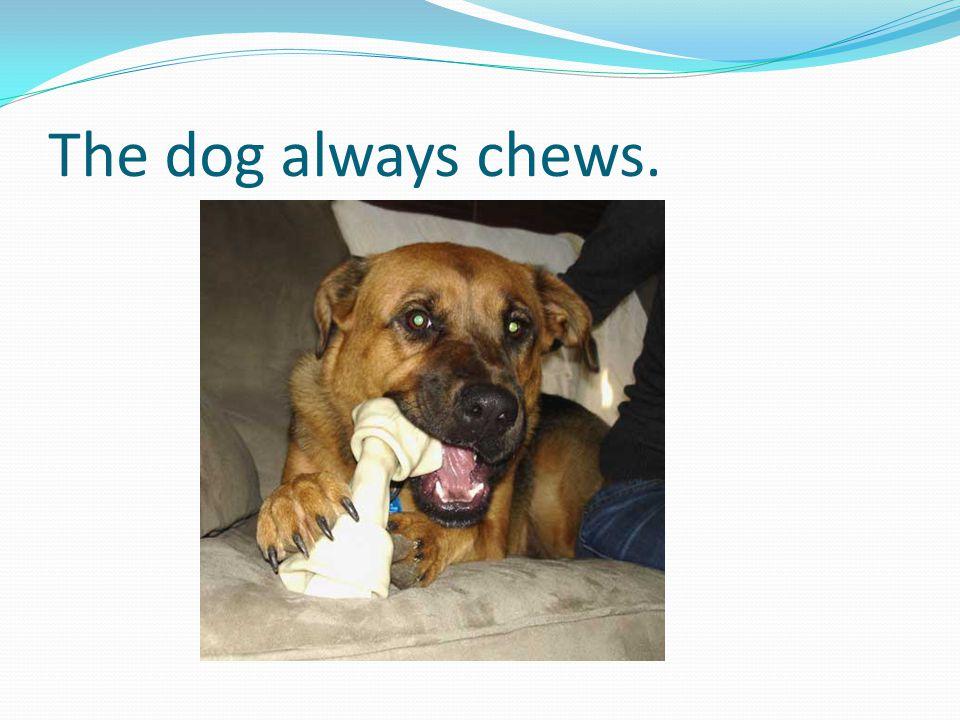 The dog always chews.