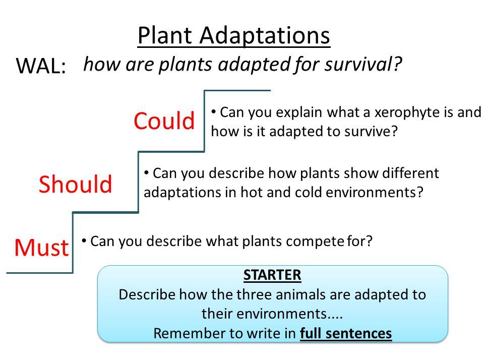 Plant Adaptations Could Should Must WAL: