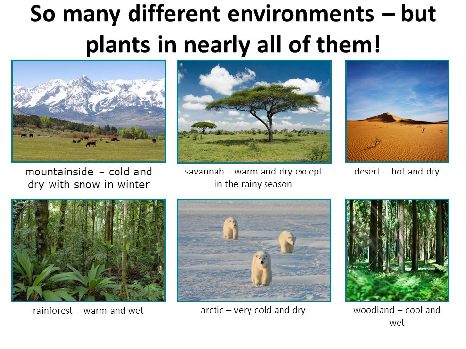 So many different environments – but plants in nearly all of them!