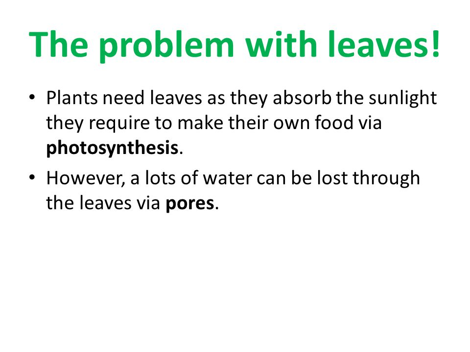 The problem with leaves!