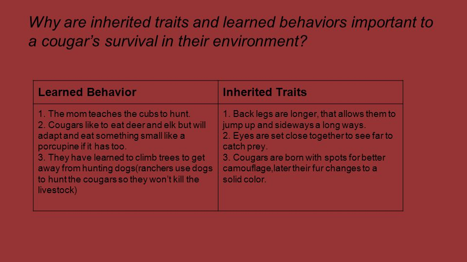 Why are inherited traits and learned behaviors important to a cougar's survival in their environment