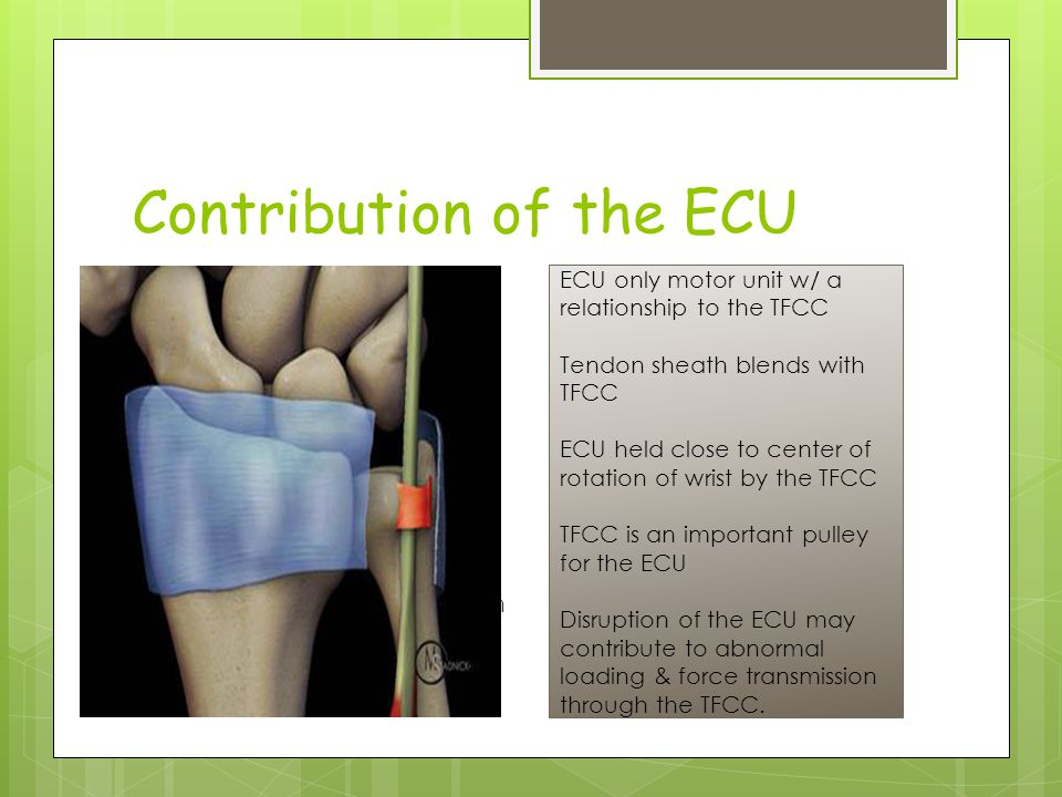 Contribution of the ECU