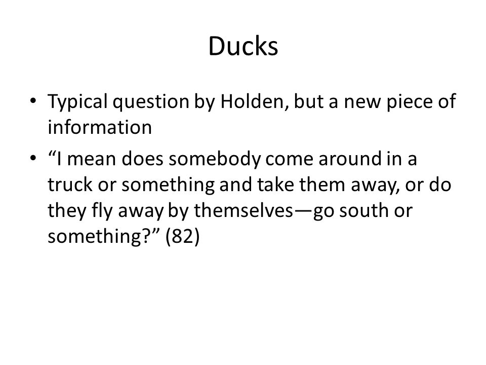 Ducks Typical question by Holden, but a new piece of information