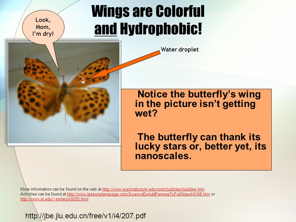 Wings are Colorful and Hydrophobic!