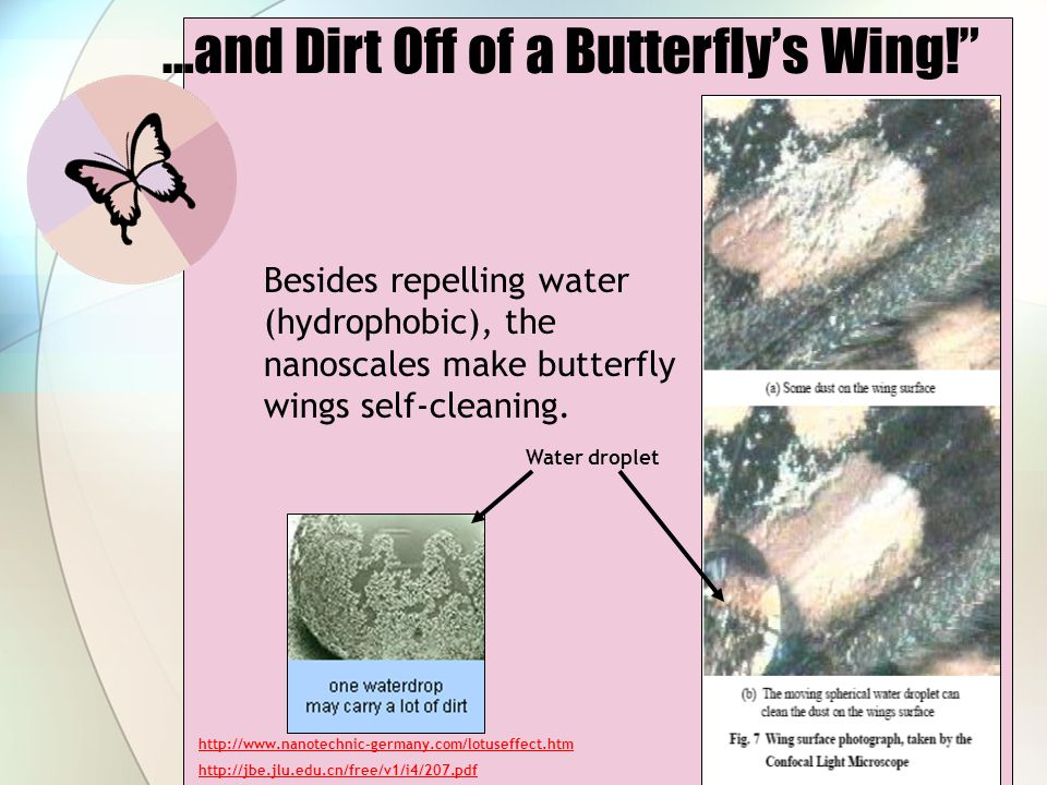 …and Dirt Off of a Butterfly's Wing!