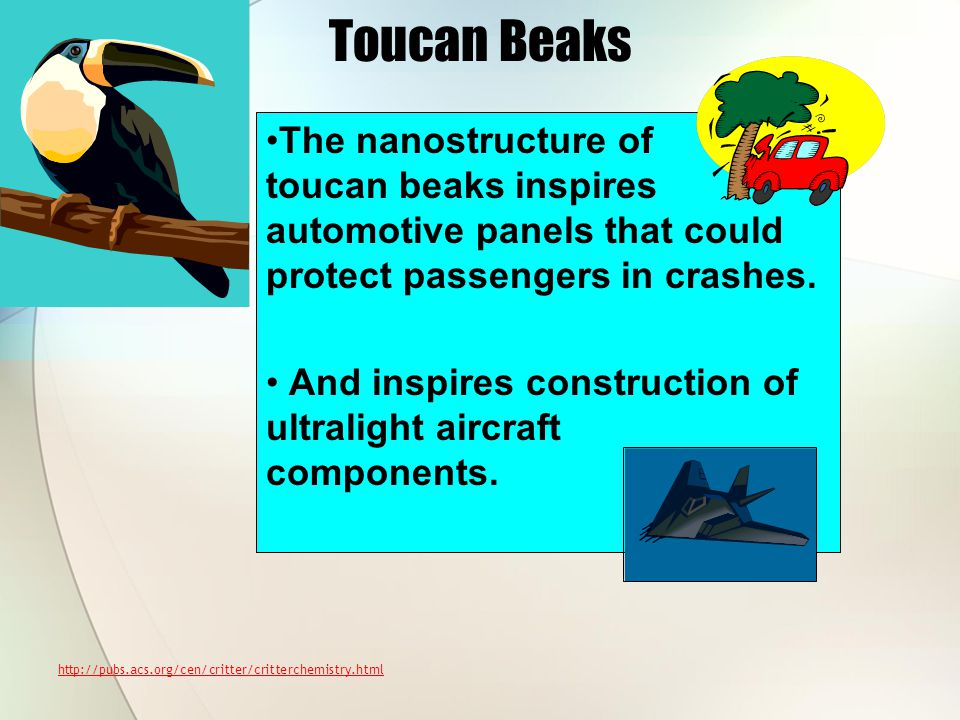 Toucan Beaks The nanostructure of toucan beaks inspires automotive panels that could protect passengers in crashes.