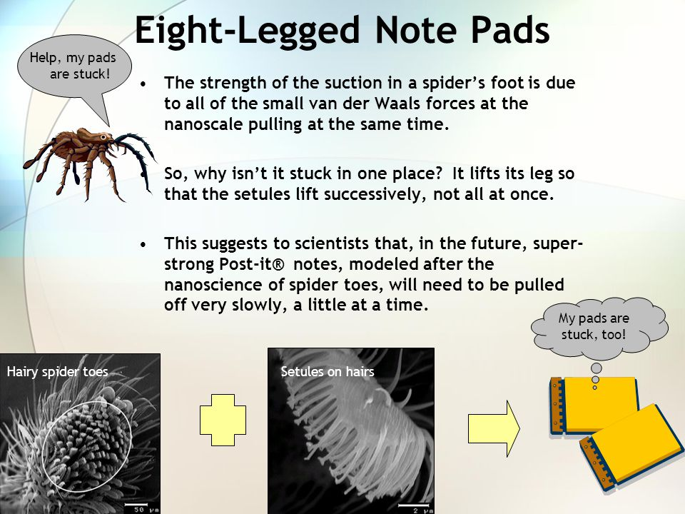 Eight-Legged Note Pads