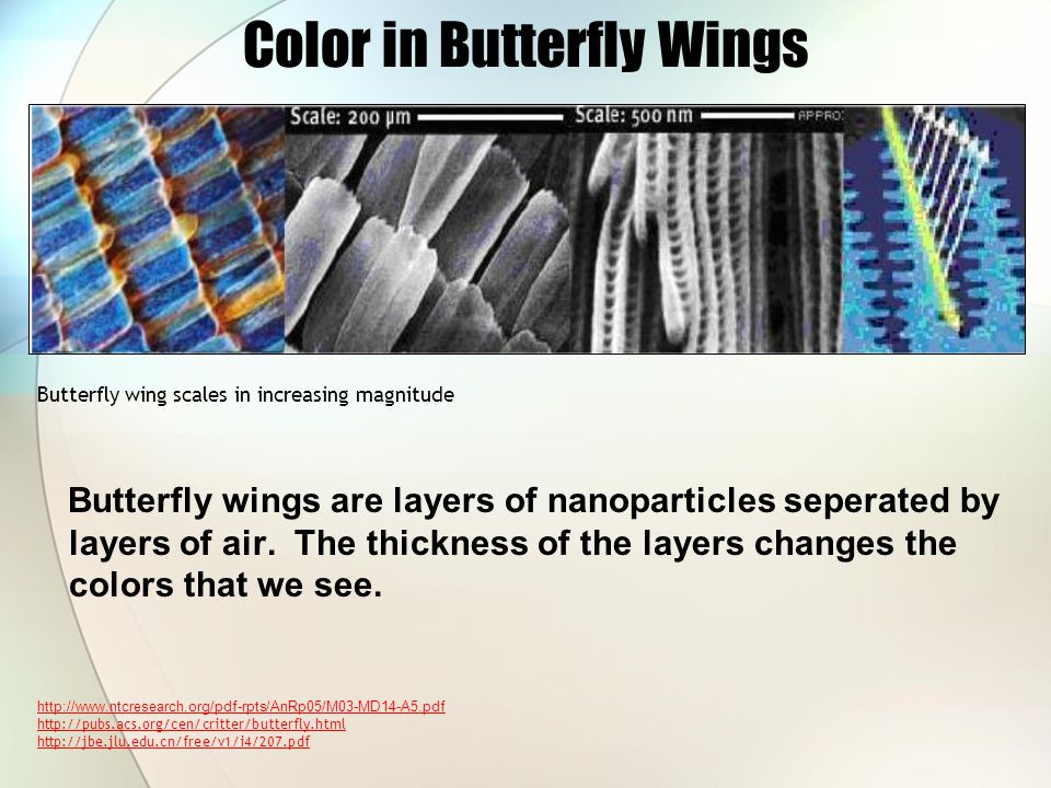 Color in Butterfly Wings