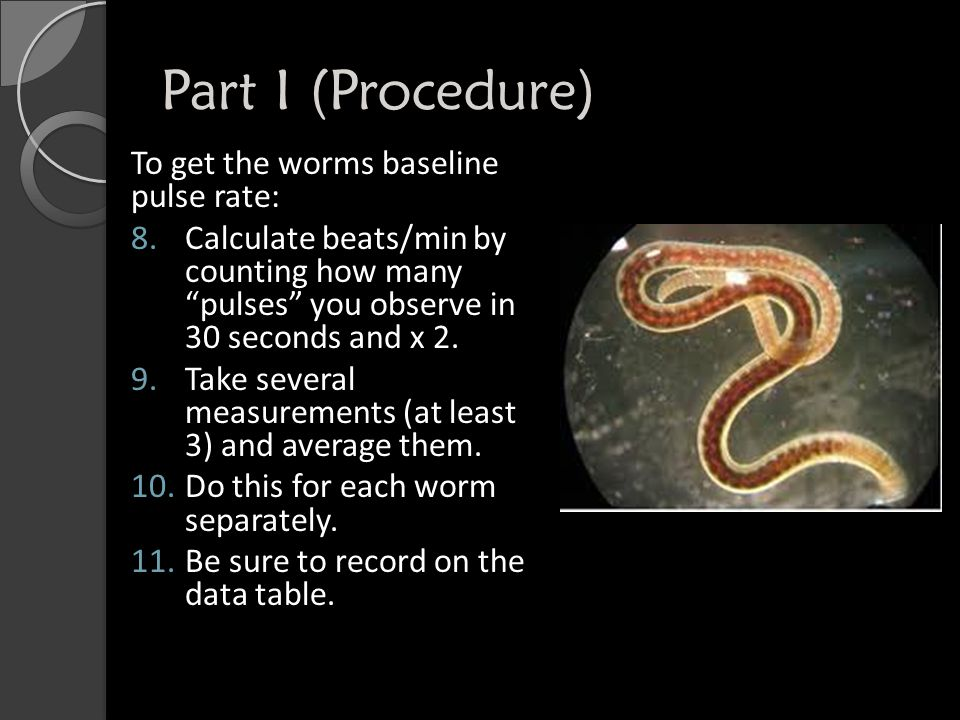 Part I (Procedure) To get the worms baseline pulse rate: