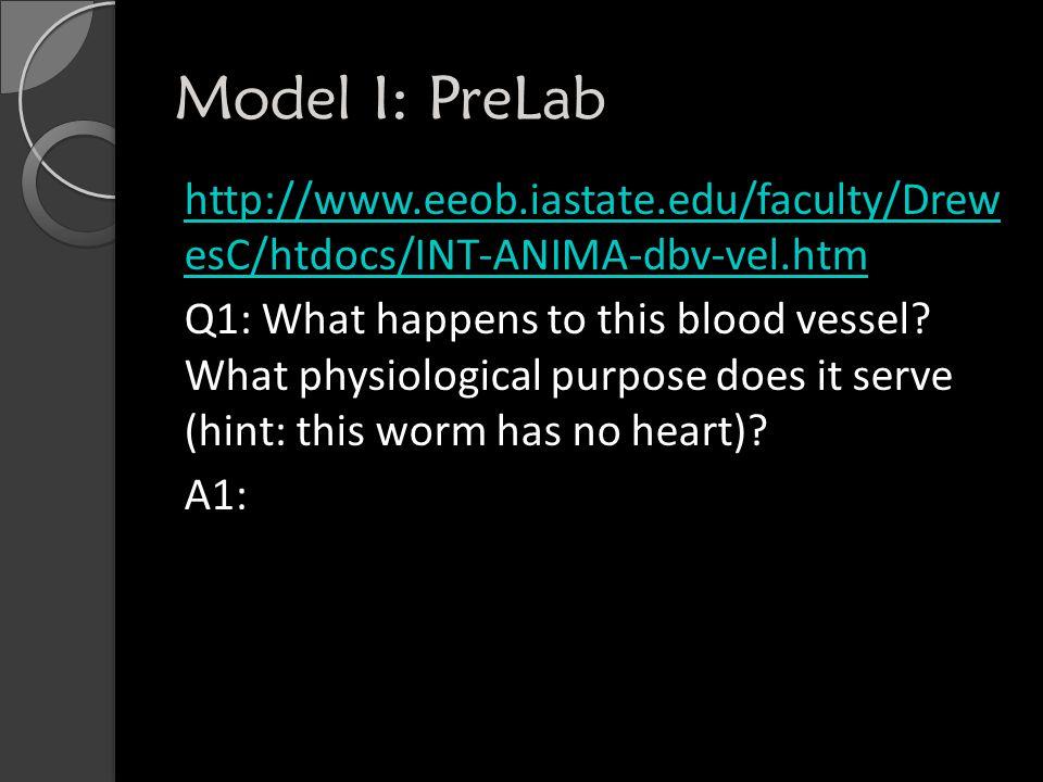 Model I: PreLab