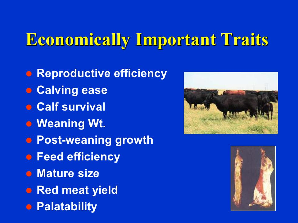 Economically Important Traits