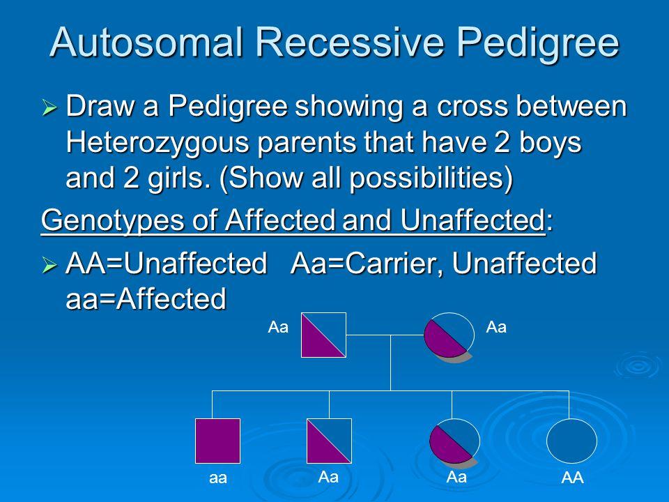 Autosomal Recessive Pedigree