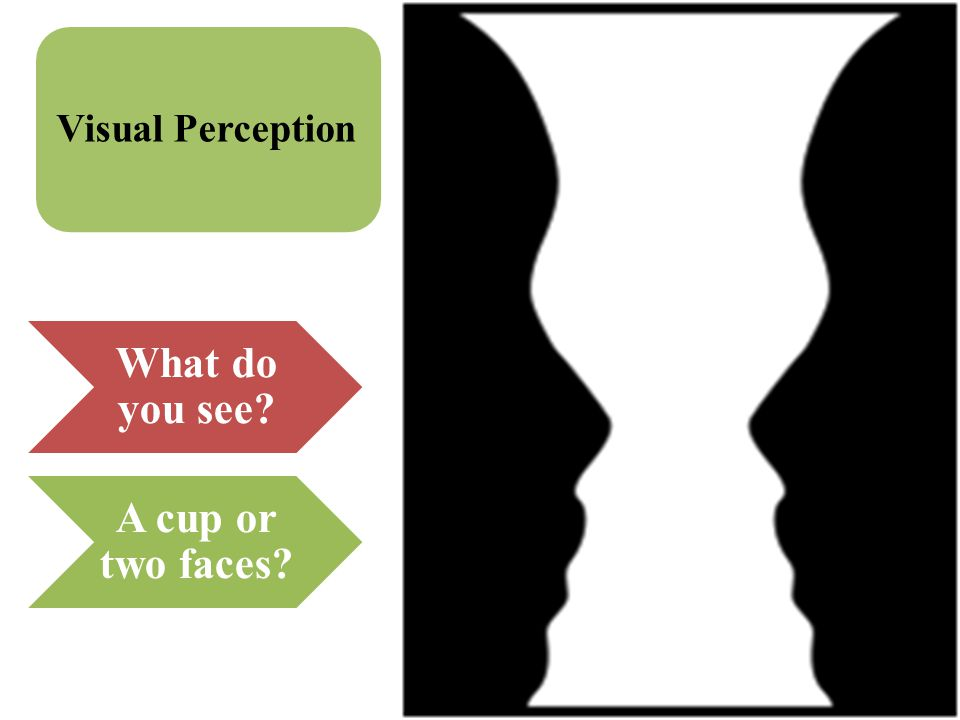 Visual Perception What do you see A cup or two faces