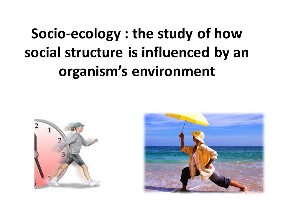 Socio-ecology : the study of how social structure is influenced by an organism's environment