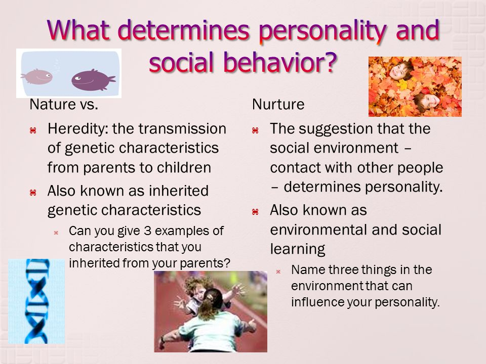 What determines personality and social behavior
