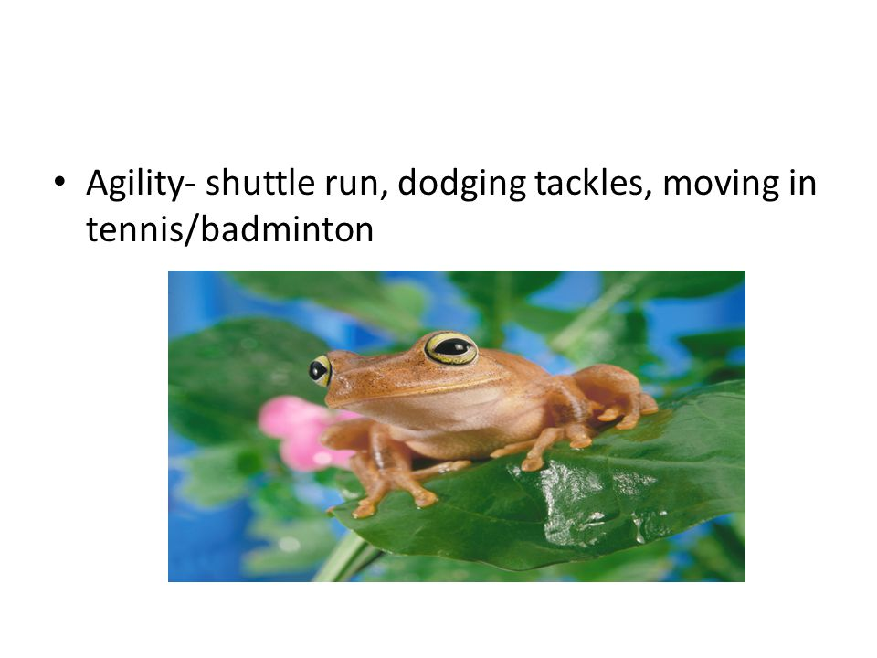 Agility- shuttle run, dodging tackles, moving in tennis/badminton