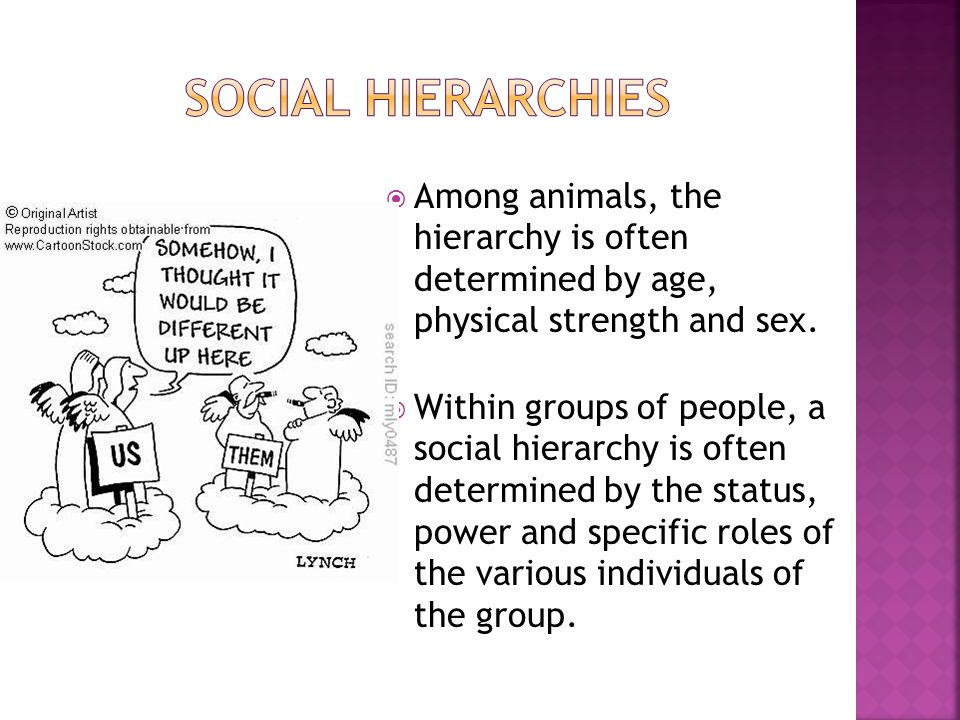 Social hierarchies Among animals, the hierarchy is often determined by age, physical strength and sex.