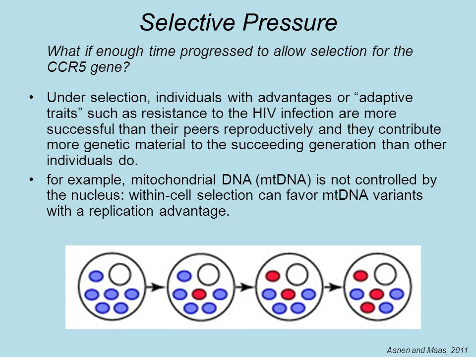 Selective Pressure What if enough time progressed to allow selection for the CCR5 gene