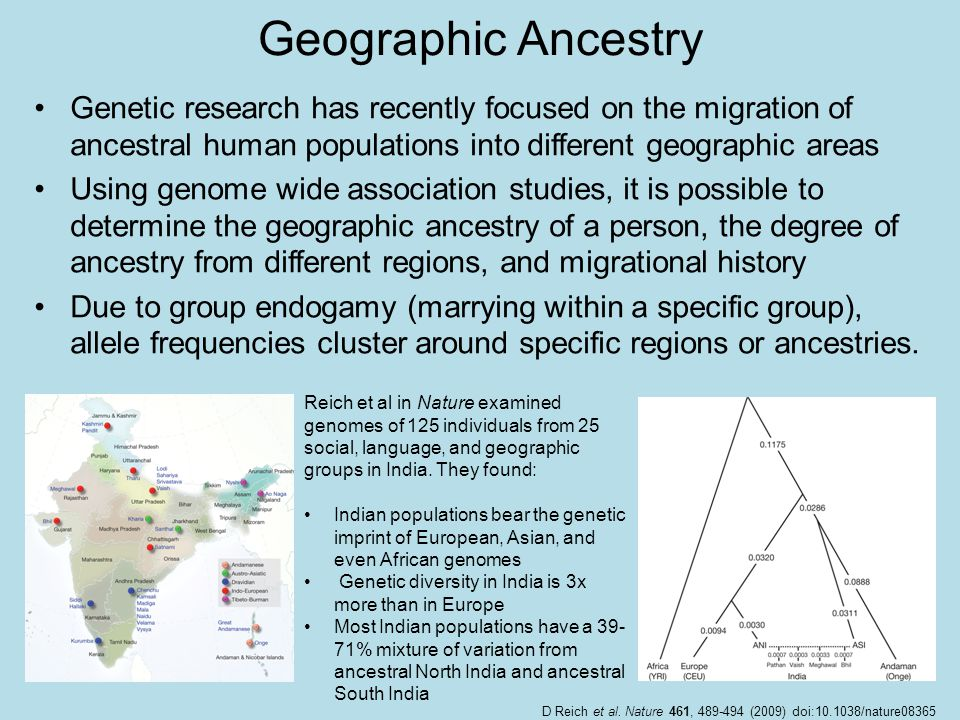 Geographic Ancestry Genetic research has recently focused on the migration of ancestral human populations into different geographic areas.