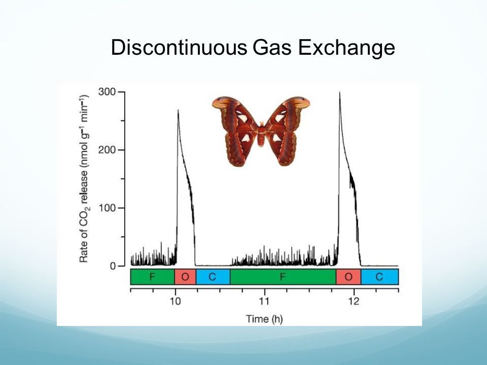 Discontinuous Gas Exchange